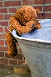 Little teddybear climbing. He is trying to look into the tub Stock Images
