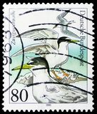 Little Tern (Sterna albifrons), Animal welfare: Endangered seabirds serie, circa 1991. MOSCOW, RUSSIA - MARCH 30, 2019: A stamp printed in Germany shows Little stock photography