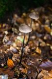 Little and thin Wild Mushrooms in the ground of the wood stock photos