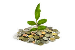 Little three plant grow on a thai money coins Stock Photography