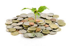 Little three plant grow on a thai money coins Royalty Free Stock Image