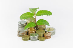 Little three plant grow on a thai money coins Stock Images