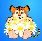 Little tiger with camomiles Royalty Free Stock Images