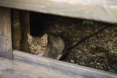 Little tiger. A little cat waiting her mother Royalty Free Stock Photography