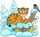 Little tiger lying in the snow and looking at him birdie Stock Images
