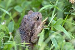 The little Toad in the Grass Stock Images