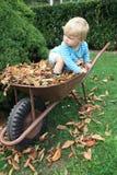Little toddler in the barrow fall season Stock Photos