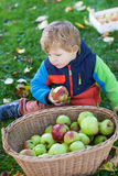 Little toddler boy with basket full of apples Stock Photo