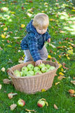 Little toddler boy with basket full of apples Stock Photos