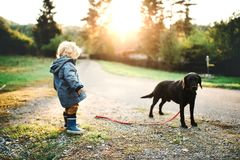 A little toddler boy and a dog outdoors on a road at sunset. stock photo