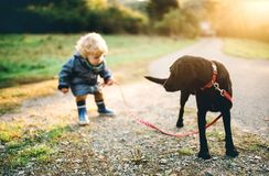 A little toddler boy and a dog outdoors on a road at sunset. stock photos