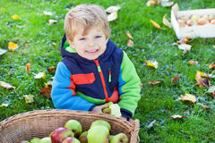 Little toddler boy eating apple Stock Images