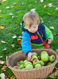Little toddler boy eating apple Royalty Free Stock Photo