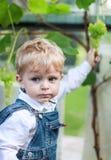 Little toddler boy eating grape Stock Image