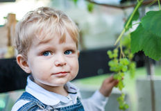 Little toddler boy eating grape Royalty Free Stock Photo