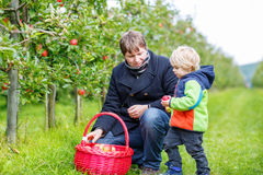Little toddler boy and father picking red apples in orchard Stock Images