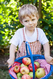 Little toddler boy holding big basket with fresh apples Stock Photo
