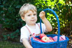 Little toddler boy holding big basket with fresh apples Royalty Free Stock Photos
