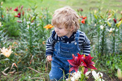 Little toddler boy on lily field in summer Royalty Free Stock Image