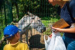 little toddler boy with mother feeding donkey at contact zoo royalty free stock photo