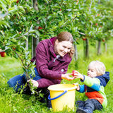 Little toddler boy and mother picking red apples in orchard Royalty Free Stock Photos