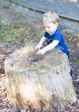 Little toddler boy of one year in summer forest Royalty Free Stock Photo