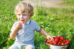 Little toddler boy on organic strawberry farm Stock Images