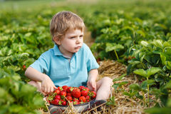 Little toddler boy on organic strawberry farm Stock Photography