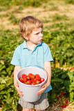 Little toddler boy on organic strawberry farm Stock Image