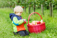 Little toddler boy picking red apples Royalty Free Stock Photo