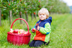 Little toddler boy picking red apples on farm Royalty Free Stock Photo