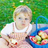 Little toddler boy picking red apples in orchard Royalty Free Stock Photo
