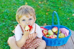 Little toddler boy picking red apples in orchard Stock Photos