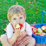 Little toddler boy picking red apples in orchard Royalty Free Stock Photography