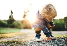 A little toddler boy picking up stones in nature at sunset. Copy space. stock images
