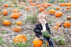 Little toddler boy on pumpkin field