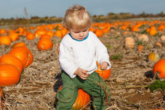 Little toddler boy on pumpkin patch field Stock Image