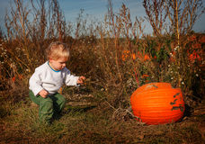 Little toddler boy on pumpkin patch field Royalty Free Stock Images