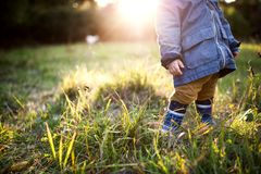 A little toddler boy standing outdoors on a meadow at sunset. Rear view. stock image