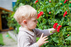 Little toddler boy in summer garden with flowers Royalty Free Stock Photo