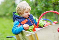 Little toddler boy of two years picking red apples in an orchard Royalty Free Stock Photo