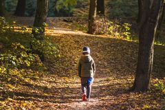 Little toddler boy walking alone through autumn forest. Path in life. Bullying in school concept. Scare and fright. Back Stock Photos