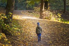 Little toddler boy walking alone through autumn forest. Path in life. Bullying in school concept. Scare and fright. Back. View stock photo