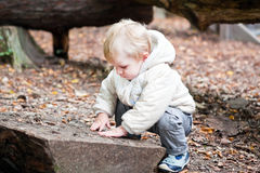 Little toddler boy walking in autumn forest Stock Images