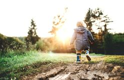 A little toddler boy walking outdoors in nature at sunset. Rear view. royalty free stock photo
