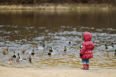 Little toddler girl feeding ducks at autumn Royalty Free Stock Images