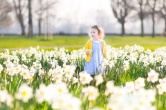 Little toddler girl field of white daffodil flowers Royalty Free Stock Image