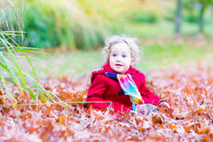 Little toddler girl with red leaves in autumn park Royalty Free Stock Photo