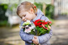 Little toddler lovely girl with red and white ranunculus flowers in spring garden. Happy cute baby holding fresh. Colorful bouquet as gift for mother`s day for stock photos