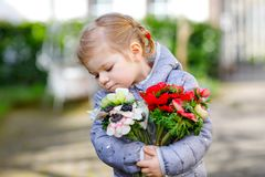 Little toddler lovely girl with red and white ranunculus flowers in spring garden. Happy cute baby holding fresh. Colorful bouquet as gift for mother`s day for stock images